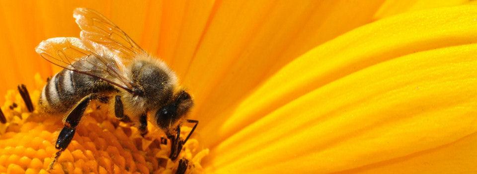 LoB – o zdrowie dla pszczół
